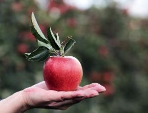 apple-2788613_1920