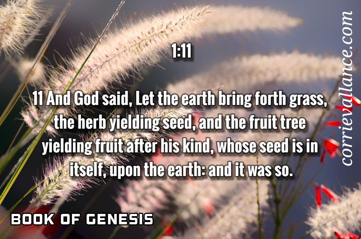Genesis | The 1:11Series