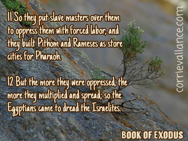 Exodus | The 1:11Series